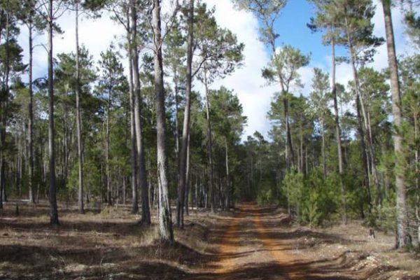 forestal3